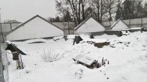 Zaczęli rozbiórkę, musieli przerwać. Zabytkowe szklarnie pod śniegiem