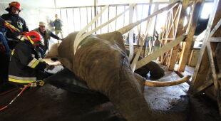 Słonica Katka potrzebowała pomocy (Gdański Ogród Zoologiczny)