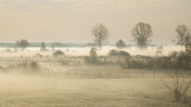 Gęste mgły. Miejscami widzialność ograniczona do 100 metrów