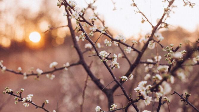 Wiosna przyjdzie z początkiem marca? Wszystko wskazuje, że tak