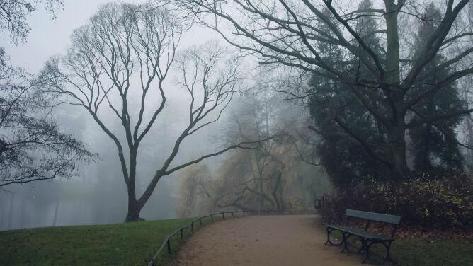 Gęsta mgła. Ostrzeżenia i prognoza zagrożeń IMGW