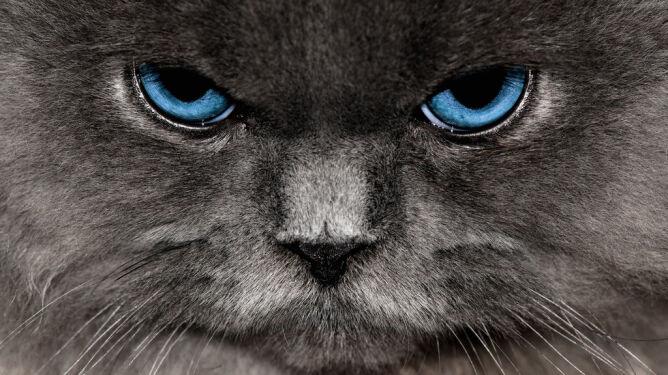 Badacze: twój kot chce cię zabić
