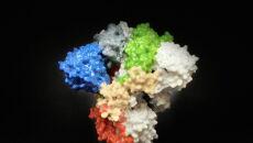 Naukowcy pokazują, jak wygląda koronawirus SARS-CoV-2 (PAP/EPA/NATIONAL INSTITUTES OF HEALTH)